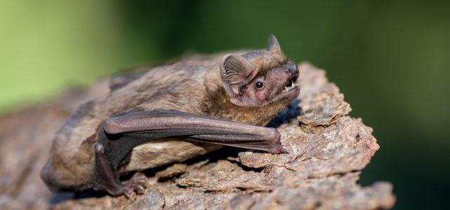 Vypouštění uzdravených netopýrů v pražské Stromovce