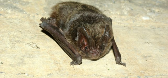 Vycházka za netopýry – Český týden v NP Thayatal