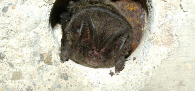 Putovní výstava o netopýrech bude ke zhlédnutí na dalších místech