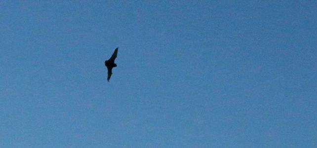 Tip pro veřejnost: kde a jak pozorovat netopýry