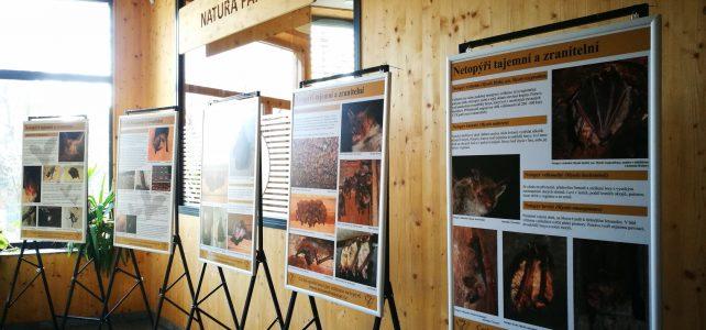 Výstava Netopýři tajemní a zranitelní v Pardubicích