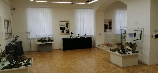 Výstava o netopýrech ve svitavském muzeu