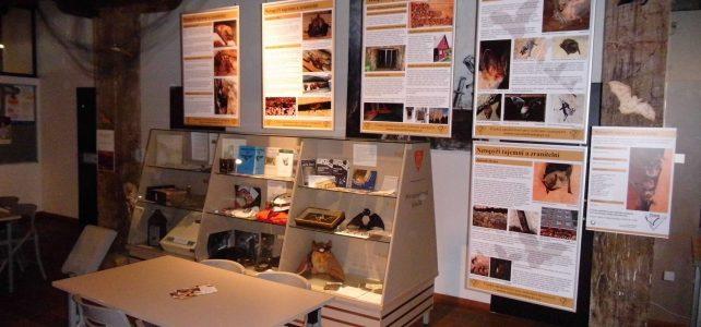 Výstava Netopýři tajemní a zranitelní v Olomouci
