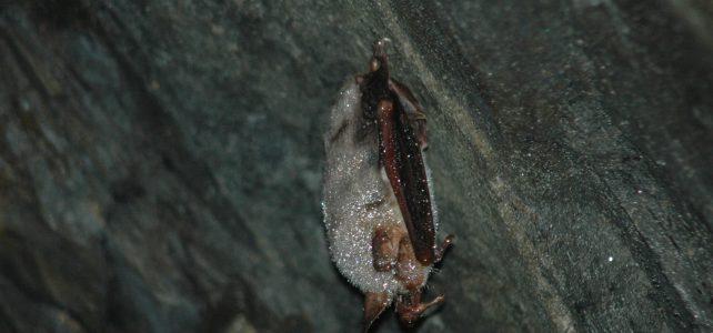 Přednáška o netopýrech v Odrách
