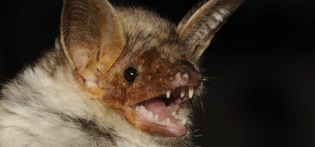 Mezinárodní noc pro netopýry 2018