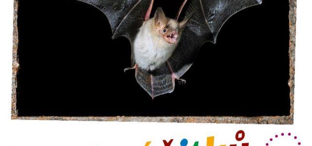 Nové výukové materiály o netopýrech (nejen) pro děti
