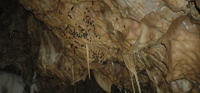 Probouzení netopýrů vJavoříčských jeskyních