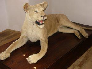lvice z proslule sbirky