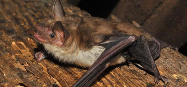Přednáška o netopýrech v kostele v Čermné