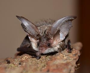 Májové akce s netopýry