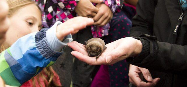 Den s netopýry v záchranné stanici Hrachov