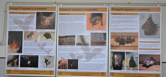 Putovní výstava o netopýrech