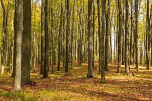 Listnaté lesy v okolí hradu poskytují netopýrům loviště i letní úkryty