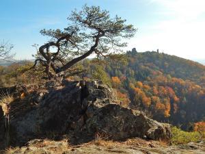 Evropsky významná lokalita Lichnice – Kaňkovy hory