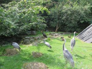 Zoo Olomouc - voliéra s jeřáby a čápy