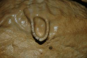 Sintrový nátek voda vytvarovala jako napaječku pro netopýry