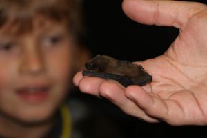Netopýří noc v zoo - ukázka hendikepovaného netopýra hvízdavého