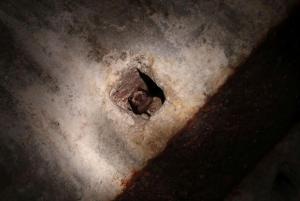 V hradním sklepení netopýři s oblibou zalézají do stropních výklenků.