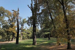 Některé druhy netopýrů se mohou úkrývat v dutinách starých stromů