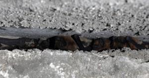 V některých letech ve sklepení zimují také netopýři hvízdaví.