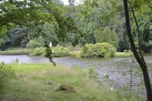 Vodní plochy v parku nabízejí netopýrům bohatá loviště.