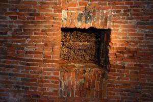 Kolonie netopýrů velkých ve výklenku na stropě sklepení.