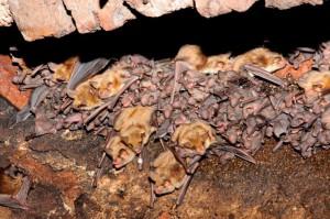 mláďata v kolonii