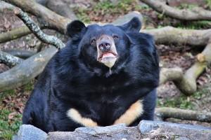 Jiří - zámecký medvěd ušatý.