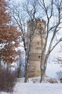 Netopýři na hradě někdy i zimují.
