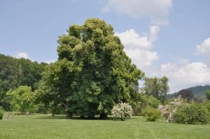 Historický zámecký park je významným stanovištěm netopýrů