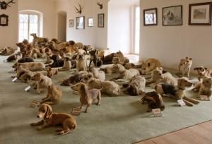 Sbírka vycpaných psů barona Haase.