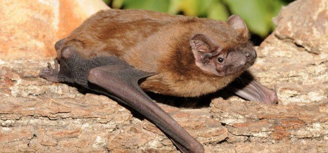 Prahou za přírodou: Za pražskými netopýry