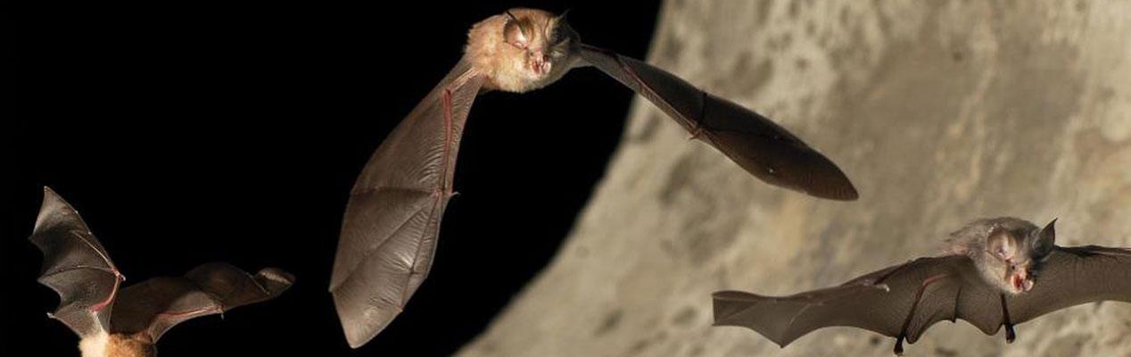 Poznejte tajemný svět netopýrů.