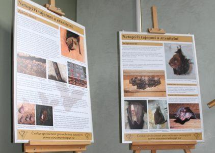Výstava o netopýrech v Krásné Lípě