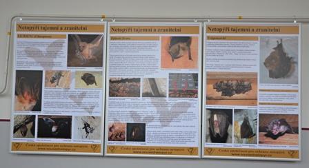 Výstava Netopýři tajemní a zranitelní v Teplicích