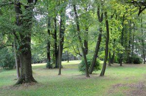 zihobce_park